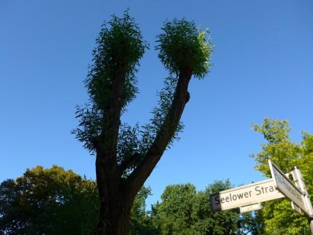Berlin - Straßenbaum
